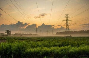 Electrical towers in a field of tall grass.