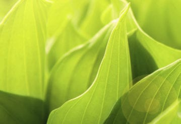 Close up of green leaves