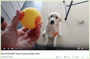 Screenshot of a youtube video where a man holds a yellow ball in front of a dog.