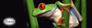 Colourful tree frog with the iboza logo on the bottom left