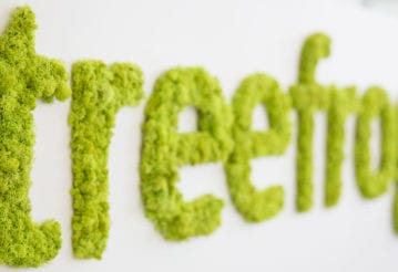 Treefrog logo made of moss