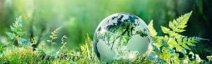 A glass globe in a bed of grass and ferns
