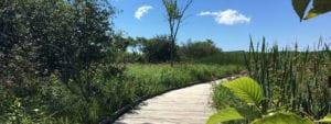 Boardwalk leading across a marsh
